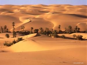 Desert_Oasis__Libya[1]