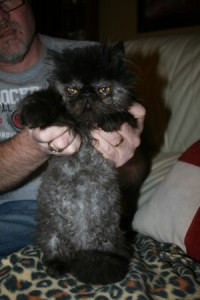 Ewok cat small