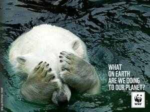 WWF-polarbear